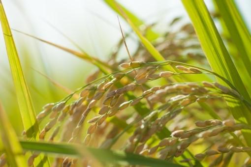 水田農業構造改革対策事業